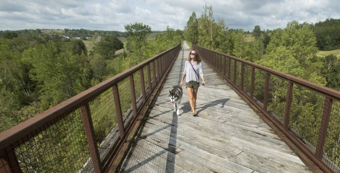 girl walking with dog on bridge