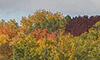 View our Fall into Kawartha Lakes page